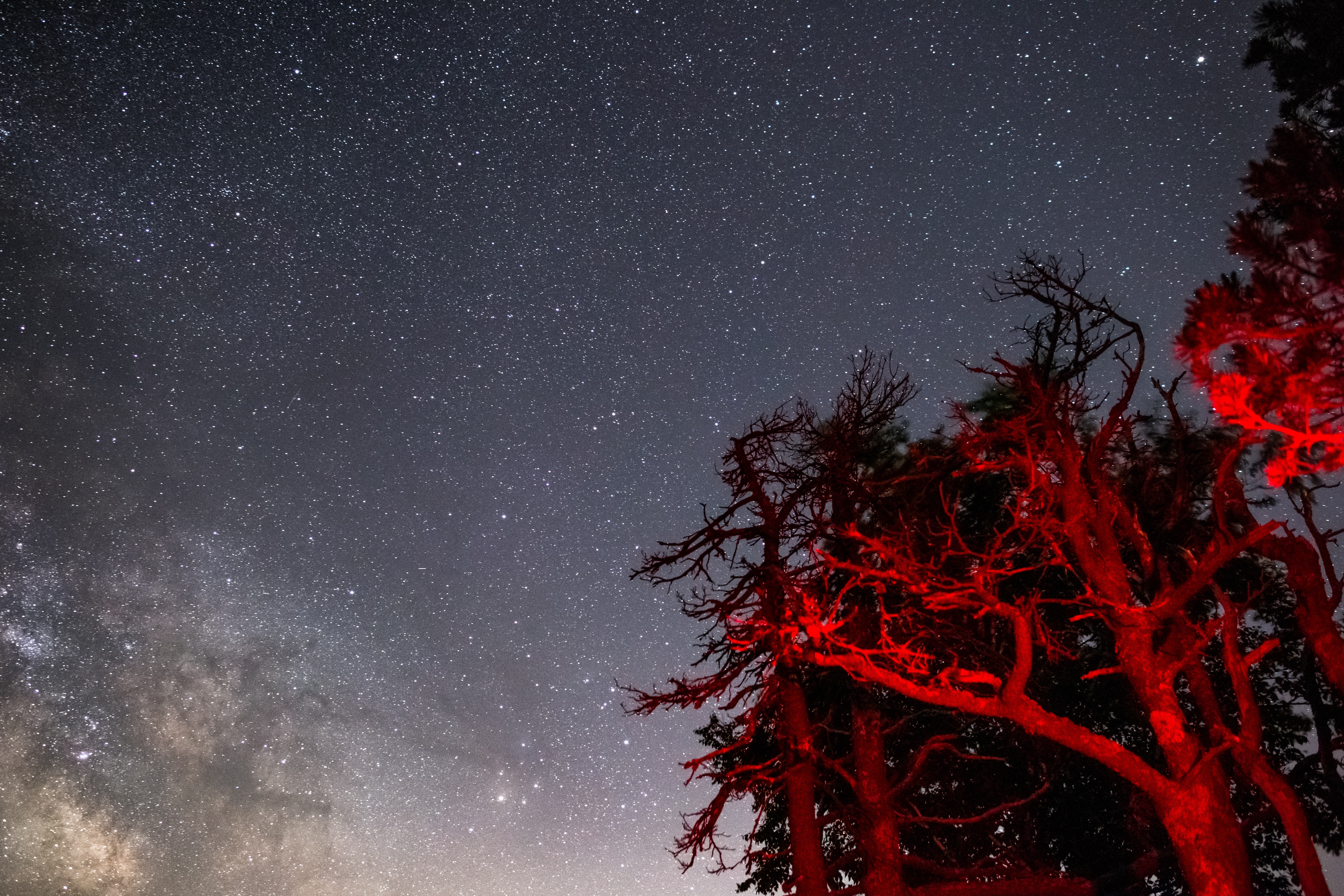 worm's-eye view of tree under starry night