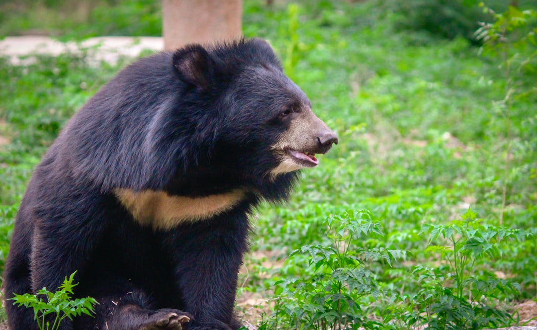 Black bear and pictures