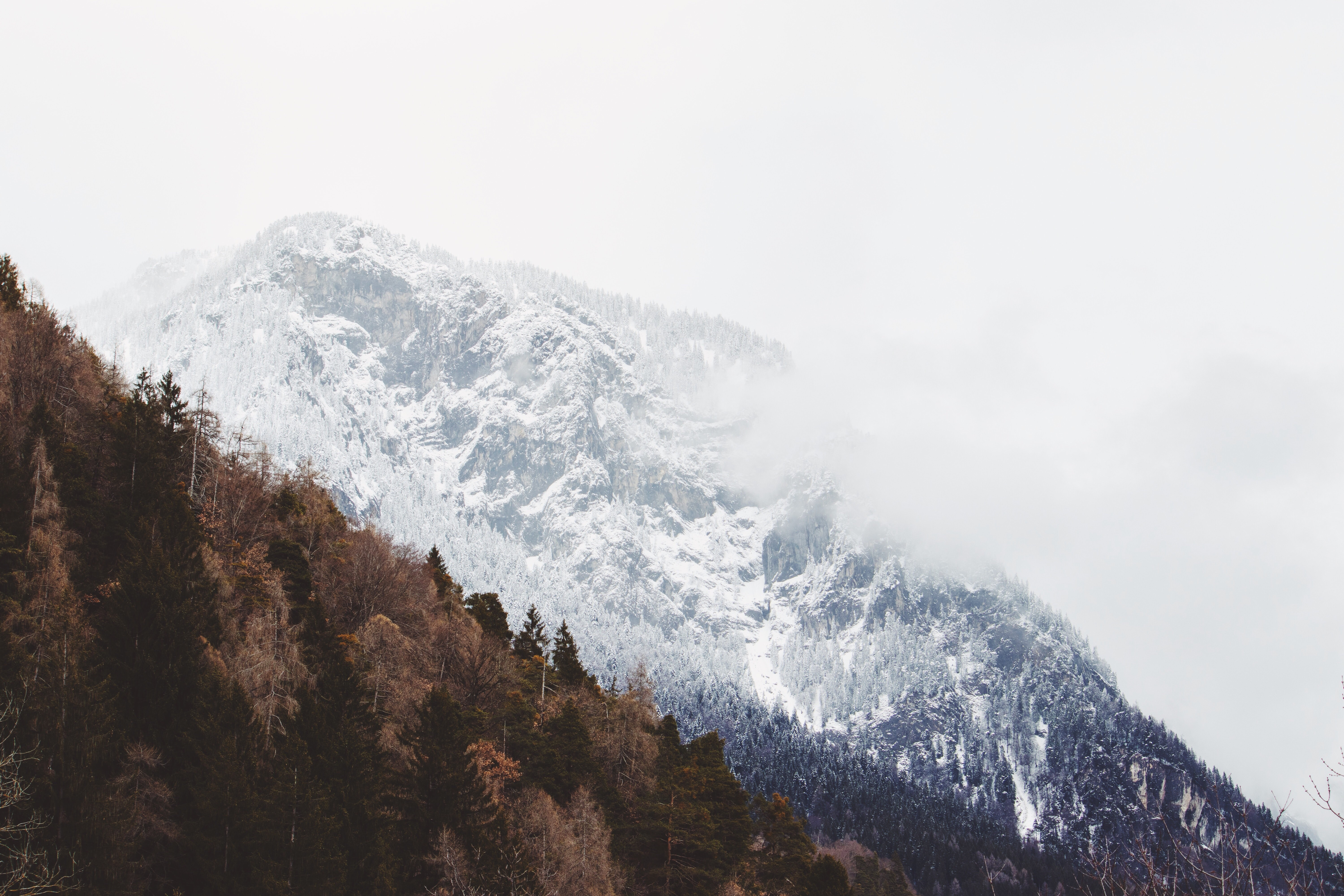 ice-capped mountain near brown trees at daytime