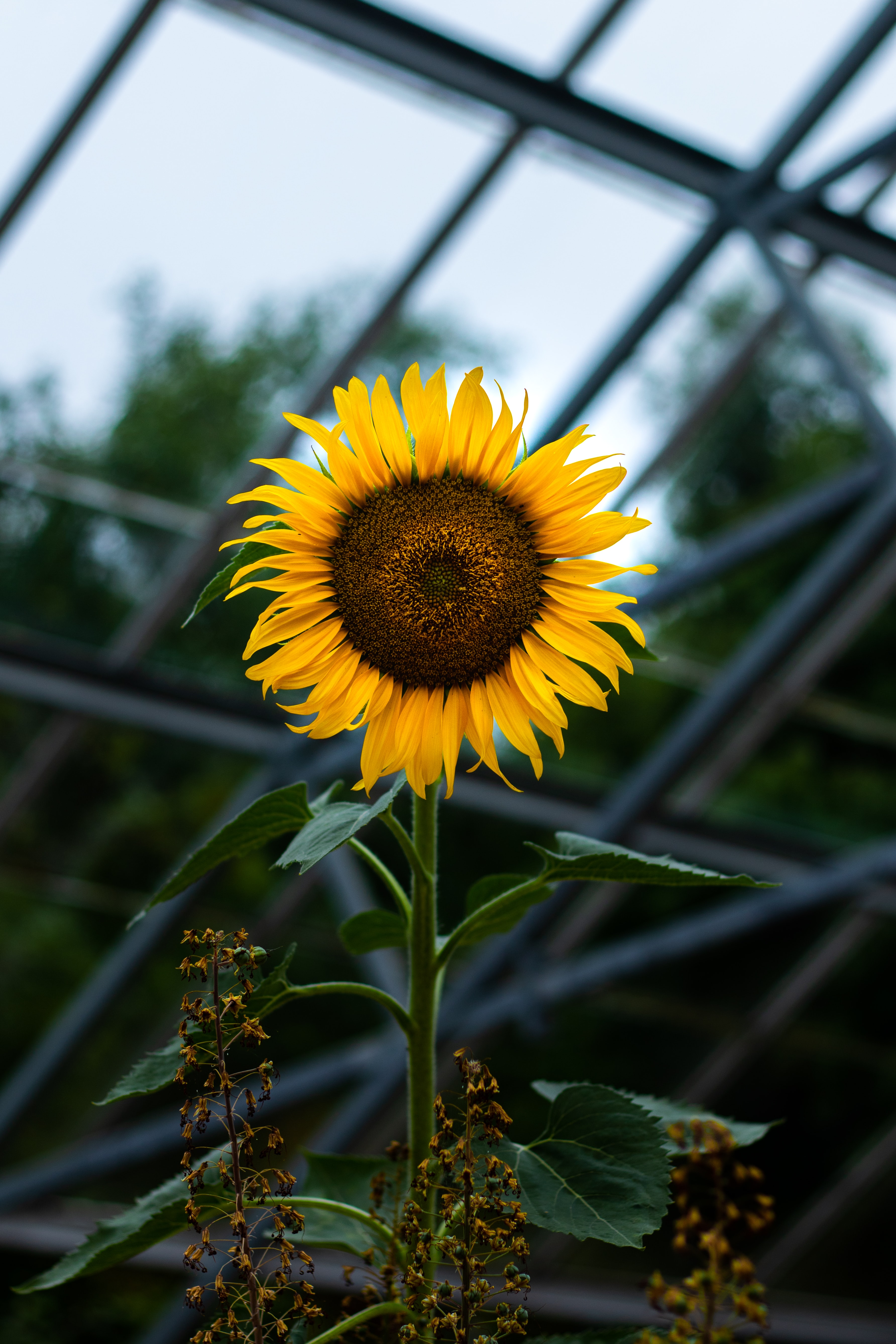 #sunflower positive stories