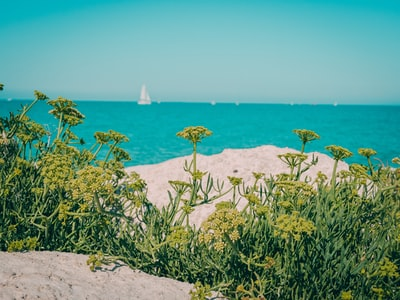 green petaled flowers on white sand near sea
