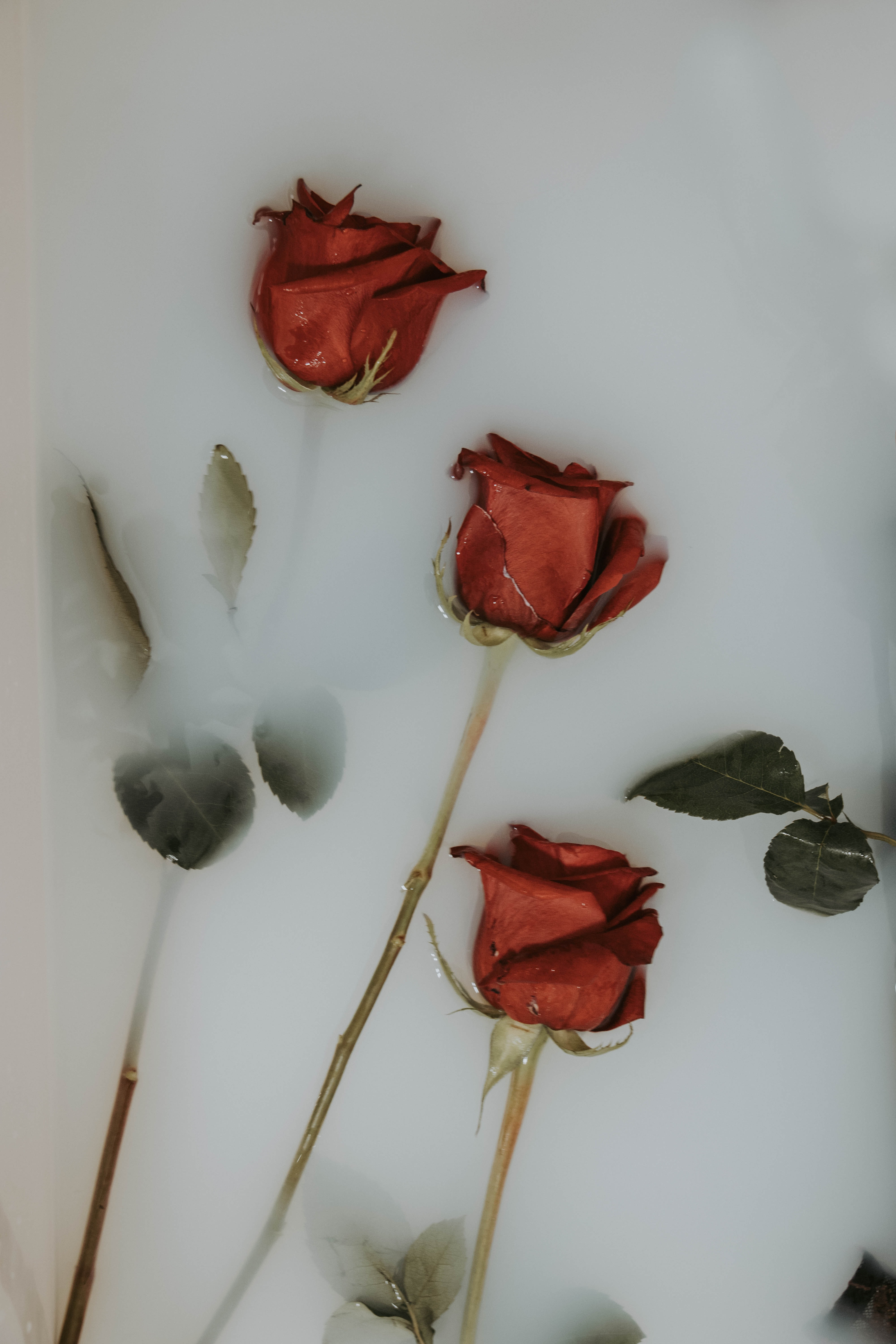 three red roses on white panel
