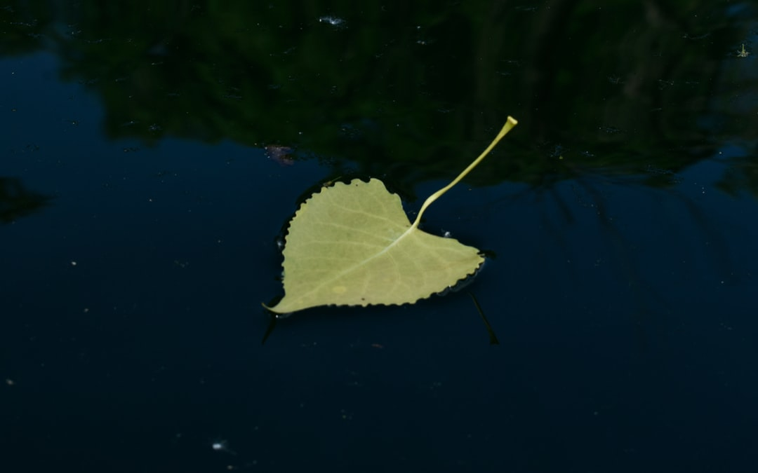 As I was paddling around in a kayak I found this singular leaf. By itself perfectly in tact just floating. I felt the serenity, peacefulness, and tranquility of a leaf my itself in a ocean of open water was something to capture.