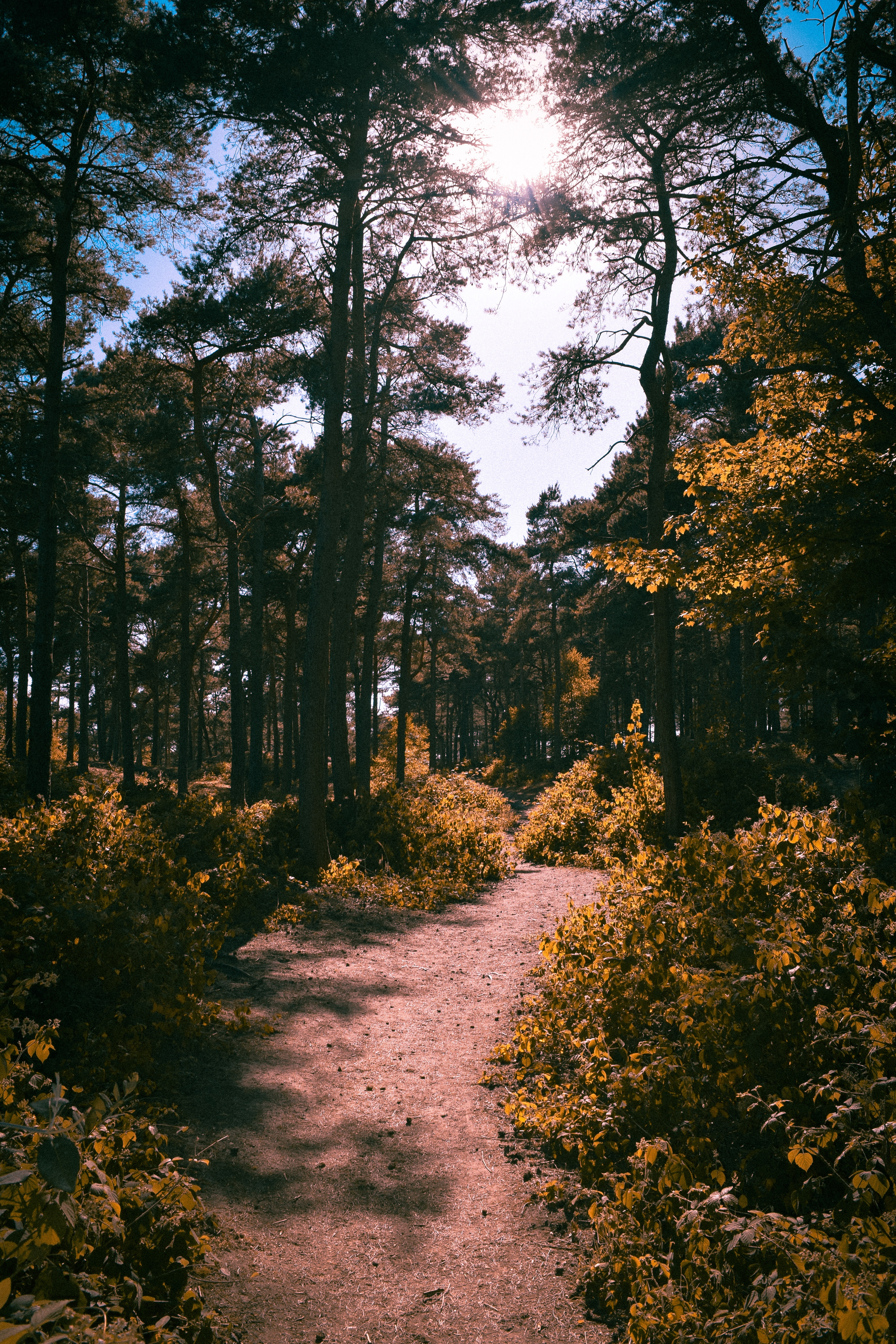 footpath between plants on forest at daytime