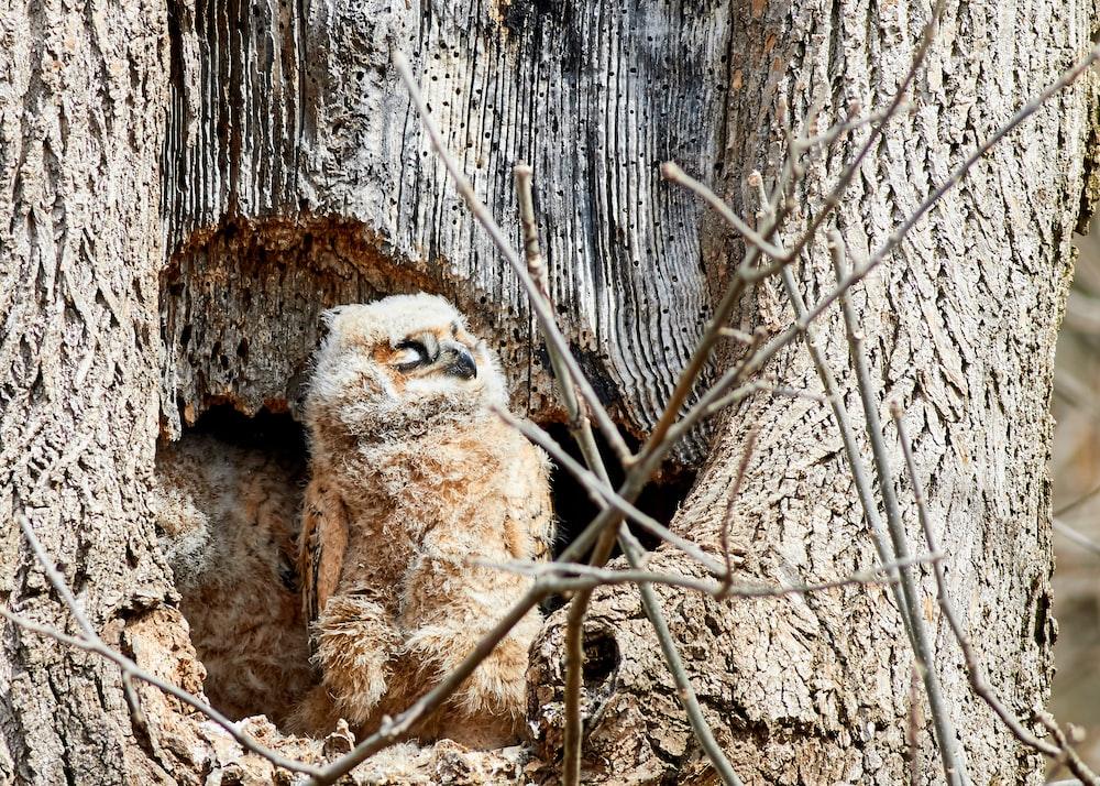brown bird on tree