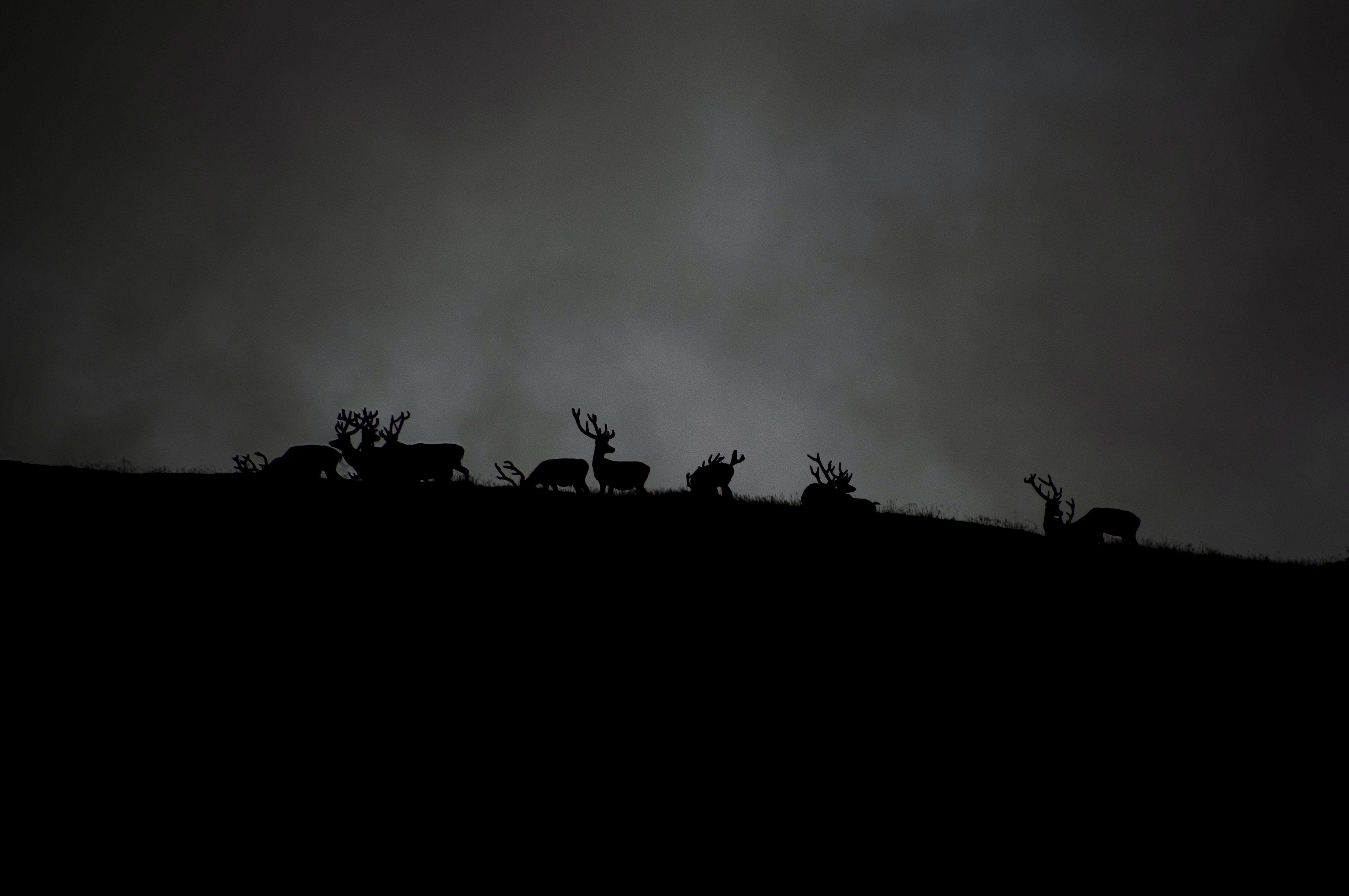silhouette of herd of deer under cloudy sky