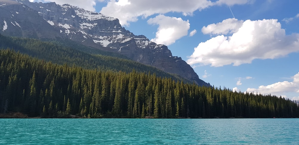 body of water near forest and snow capped mountain