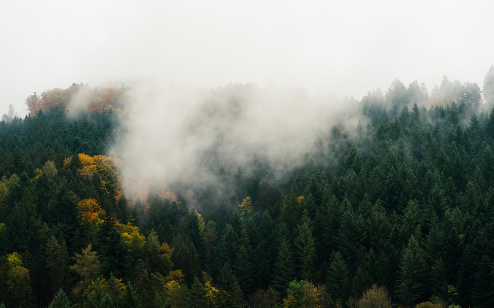 forest with thick fog