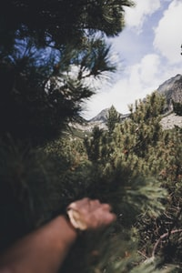 person holding palm tree near mountain alps