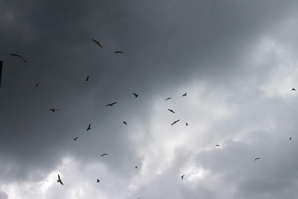 birds in flight under cloudy sky