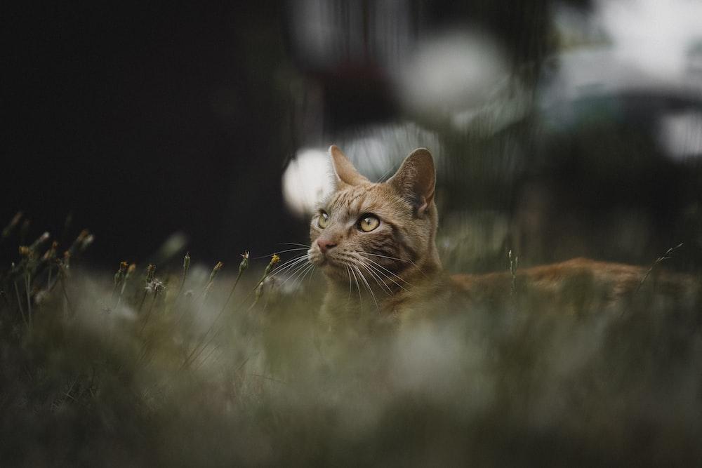 brown tabby cat standing near plants