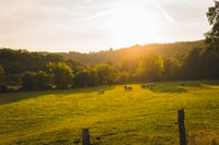 landscape photography of animal walks on green grass field