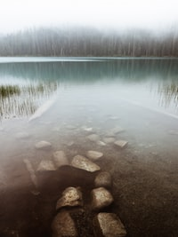landscape photography of trees near body of water surrounded with fogs