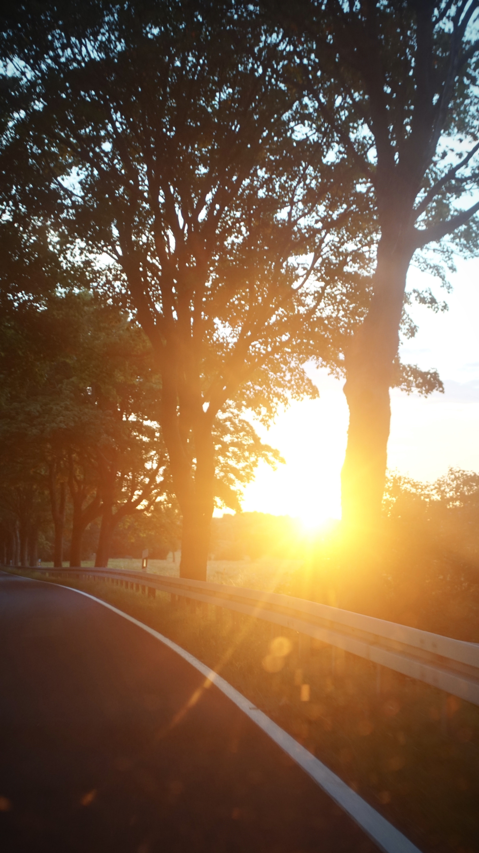 silhouette of trees beside asphalt road