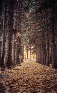 photo of forest walk