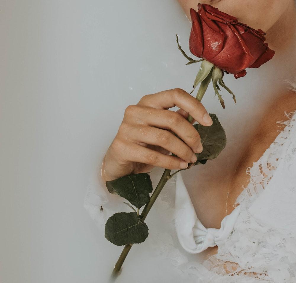 27+ Roses Images | Download Free Images on Unsplash