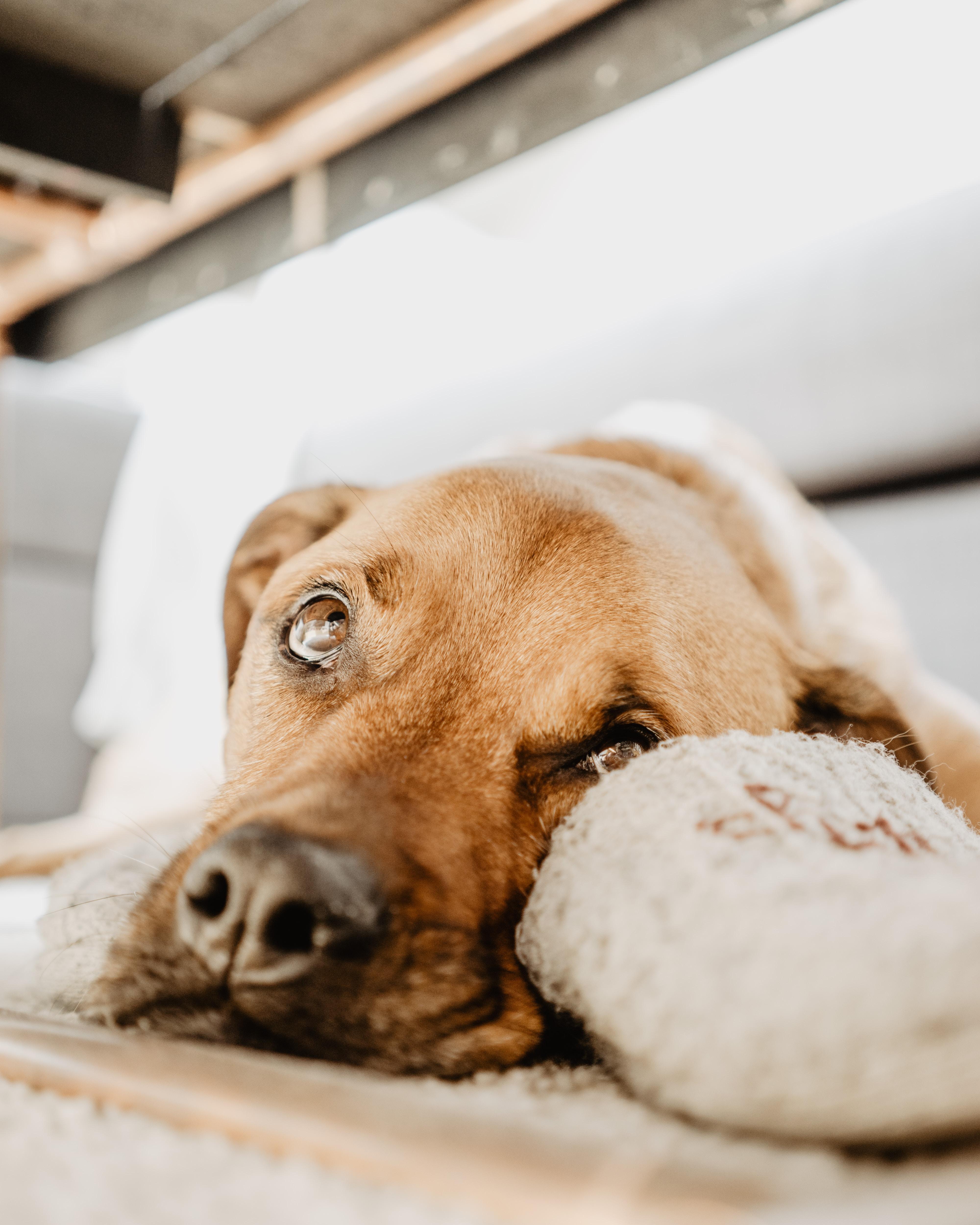 brown dog lying on beige mat