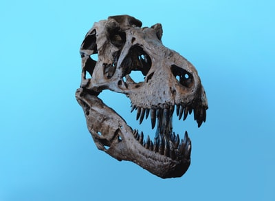 Jurassic Heads