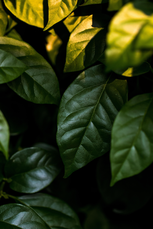 closeup photo of ovate leafed plant