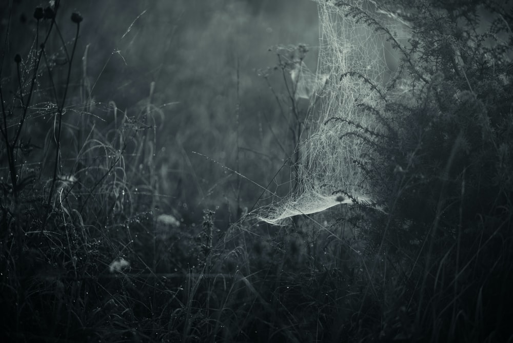 grayscale photo of spider's web and grass field