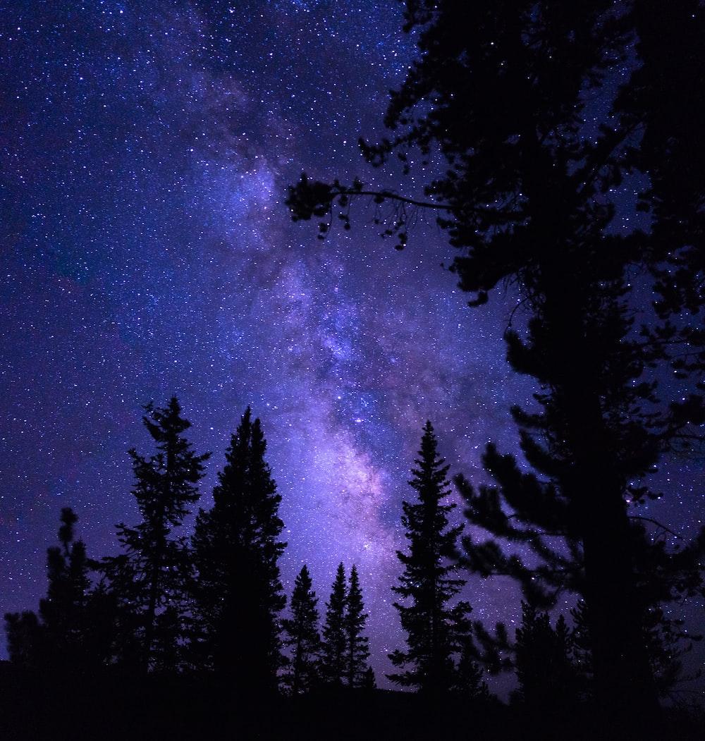 silhouette trees under purple galaxy