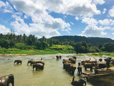 brown elephants on body of water under blue cloudy sky during daytime sri lanka teams background