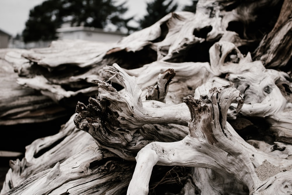 close up photography of beige driftwood