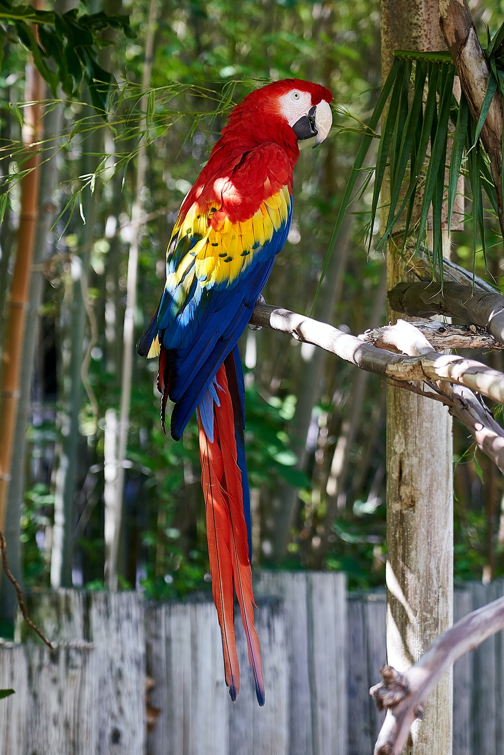 parrot on tree branch