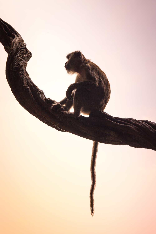 brown monkey sitting on branch