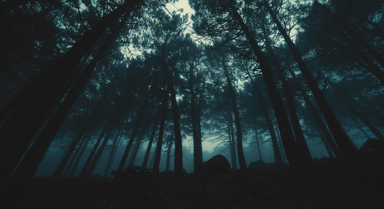 The Night's Hook tanka poem stories