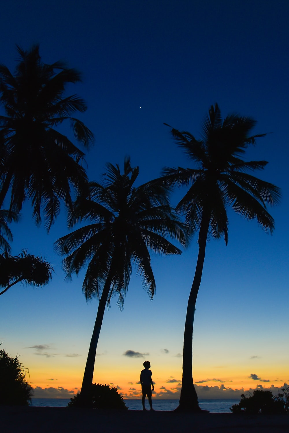 silhouette of person standing underneath palm tree