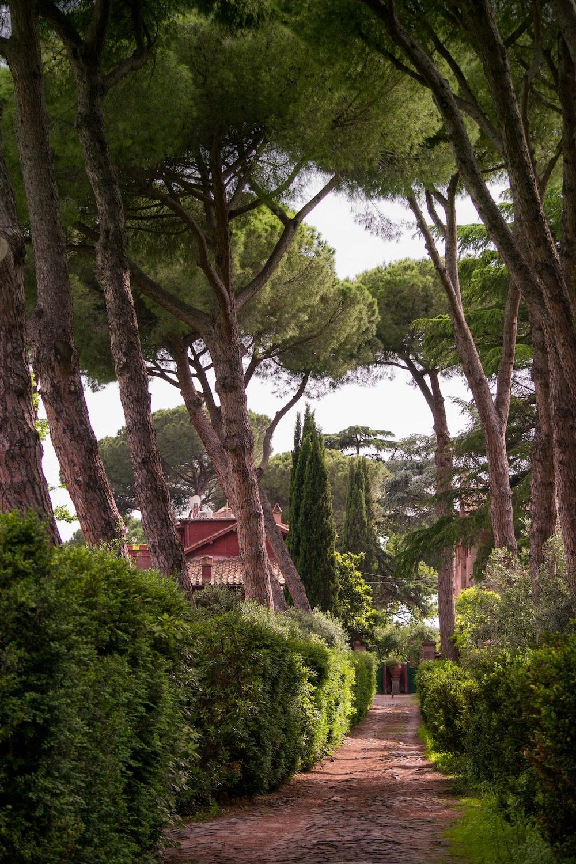 green trees near house