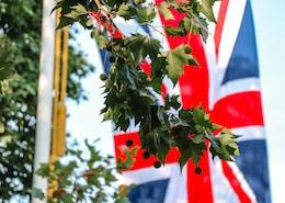 United Kingdom flag near green leaf tree during daytime