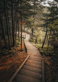 brown wooden pathway towards green tall trees