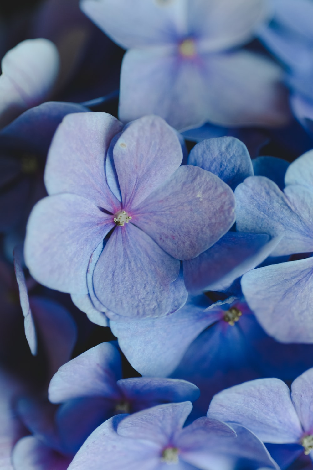 Violet Pictures Download Free Images On Unsplash