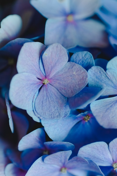 close-up photo of white and purple petaled flowers