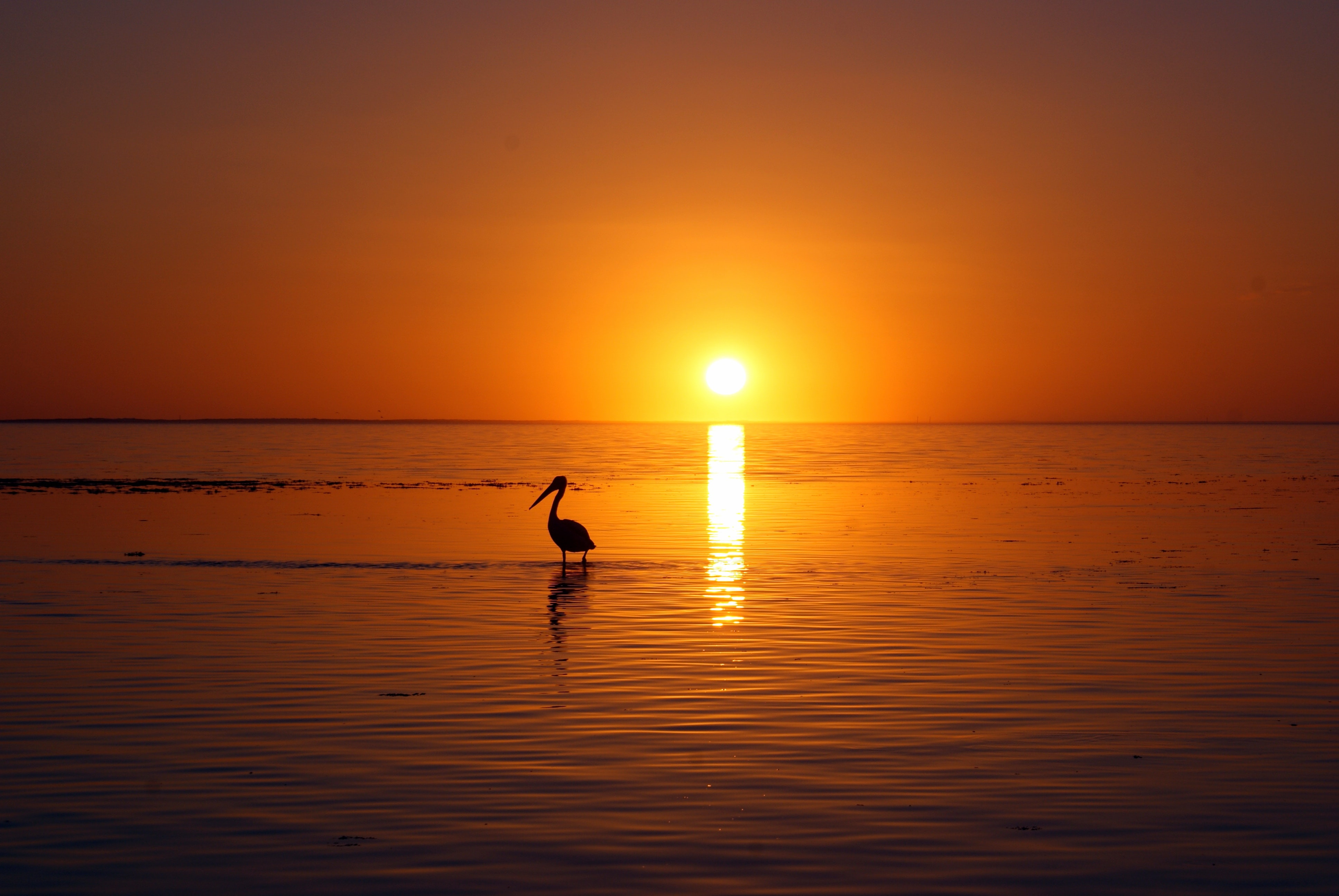 silhouette of bird on body of water at golden hour