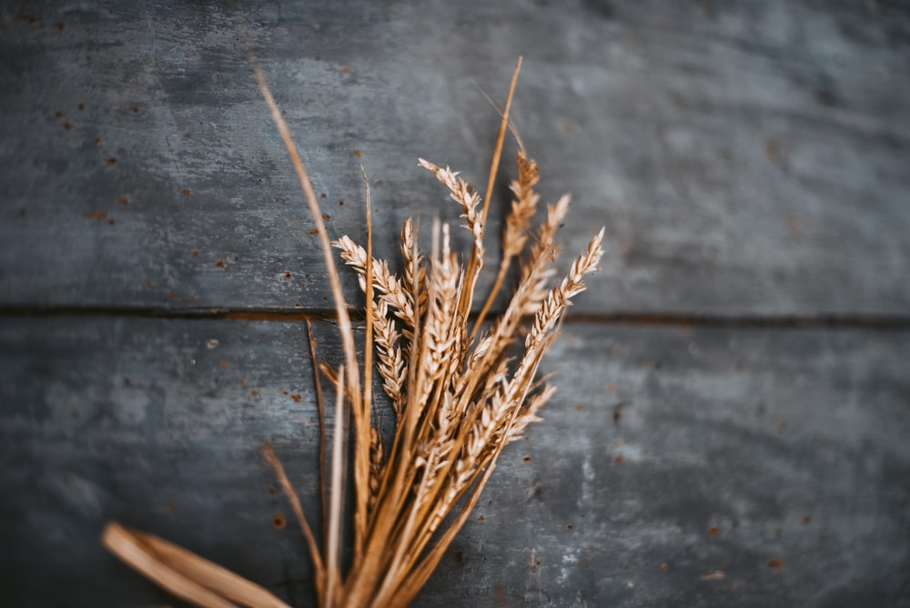 selective focus photography of wheat on brown surface