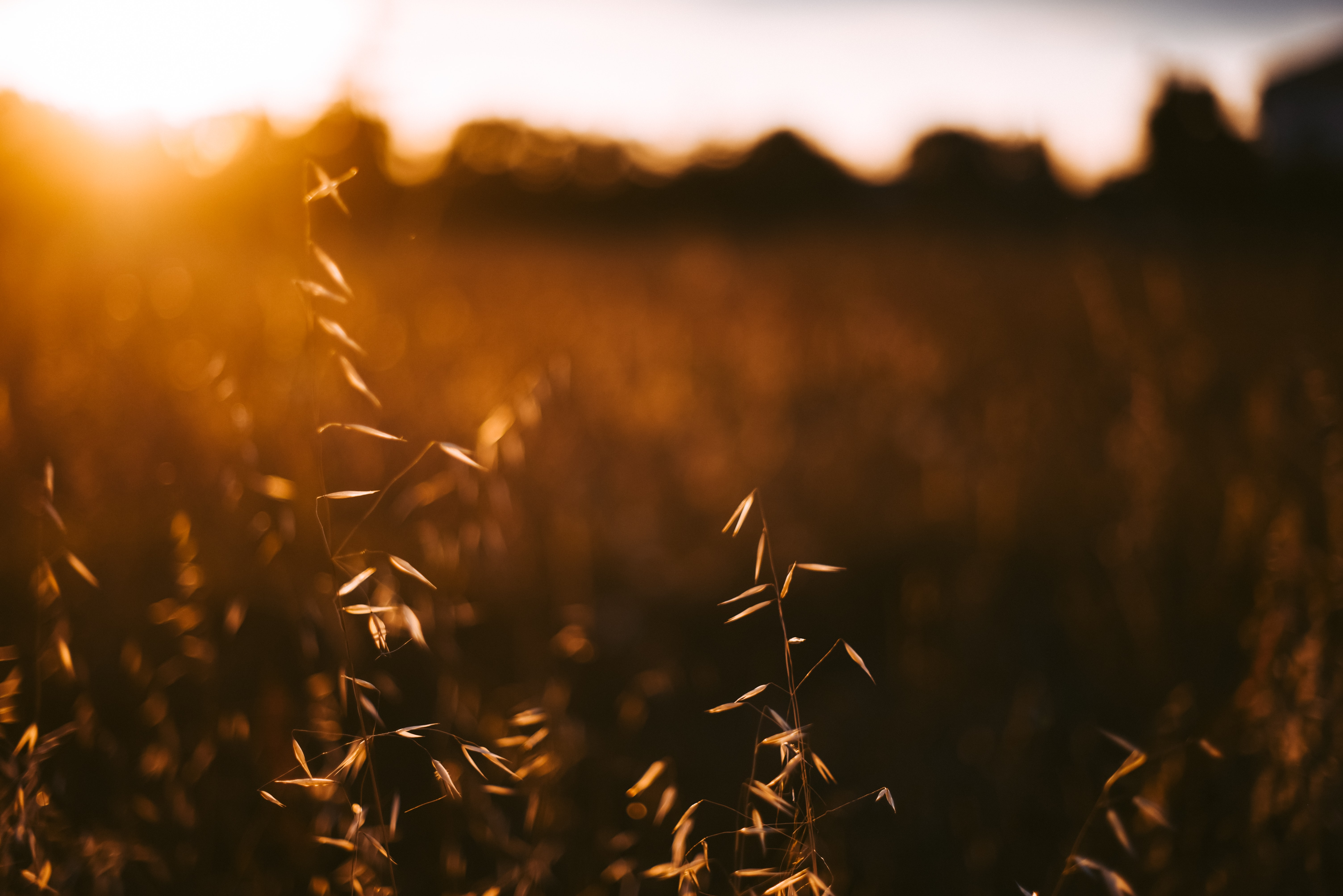 selective focus photography of plant during golden hour