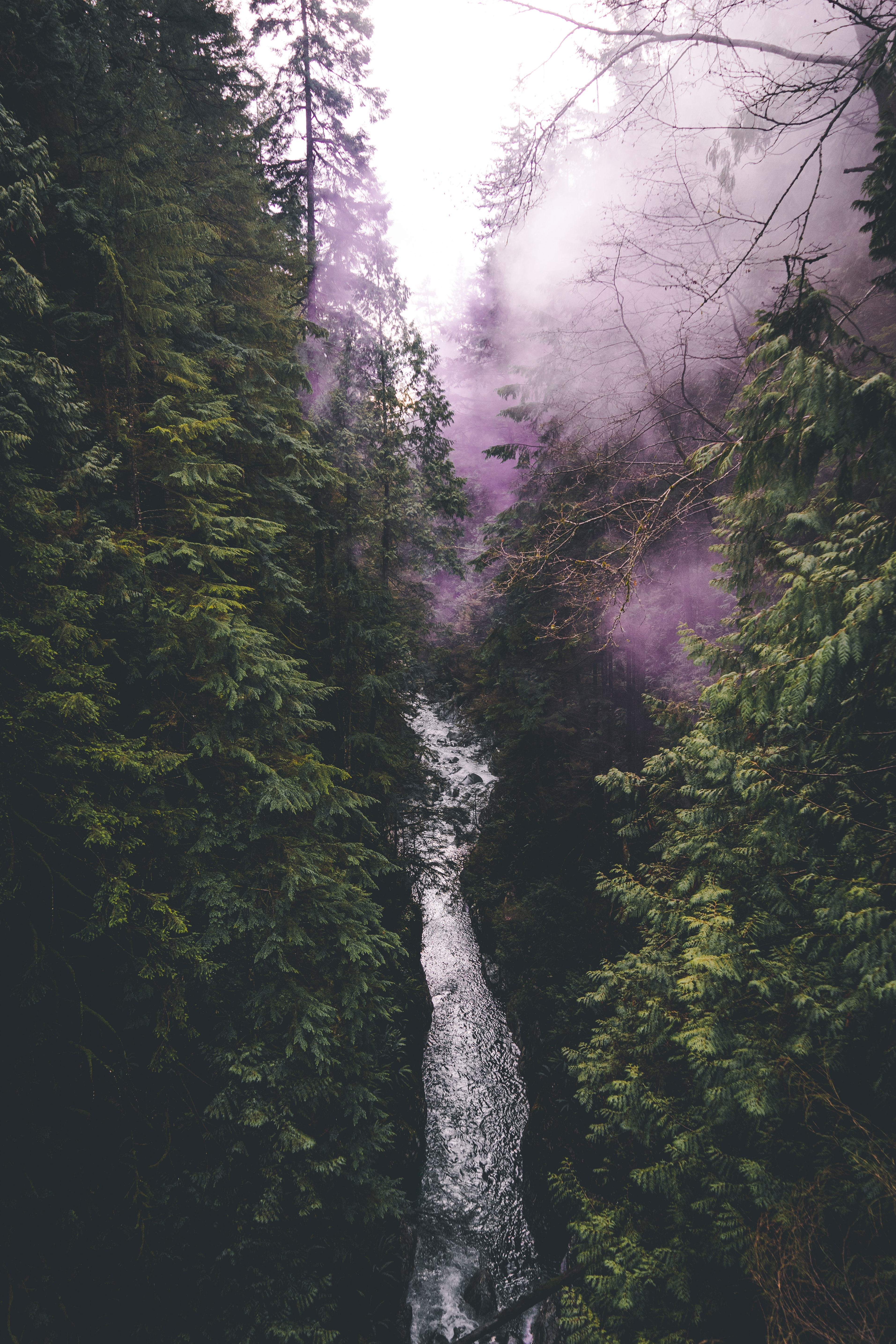 bird's-eye photography of river between birch trees with purple smoke
