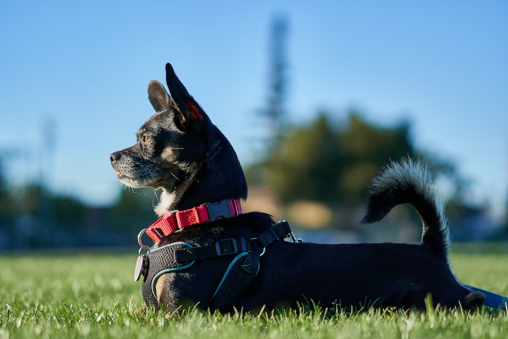 short-coated black puppy lying on green grass field at daytime