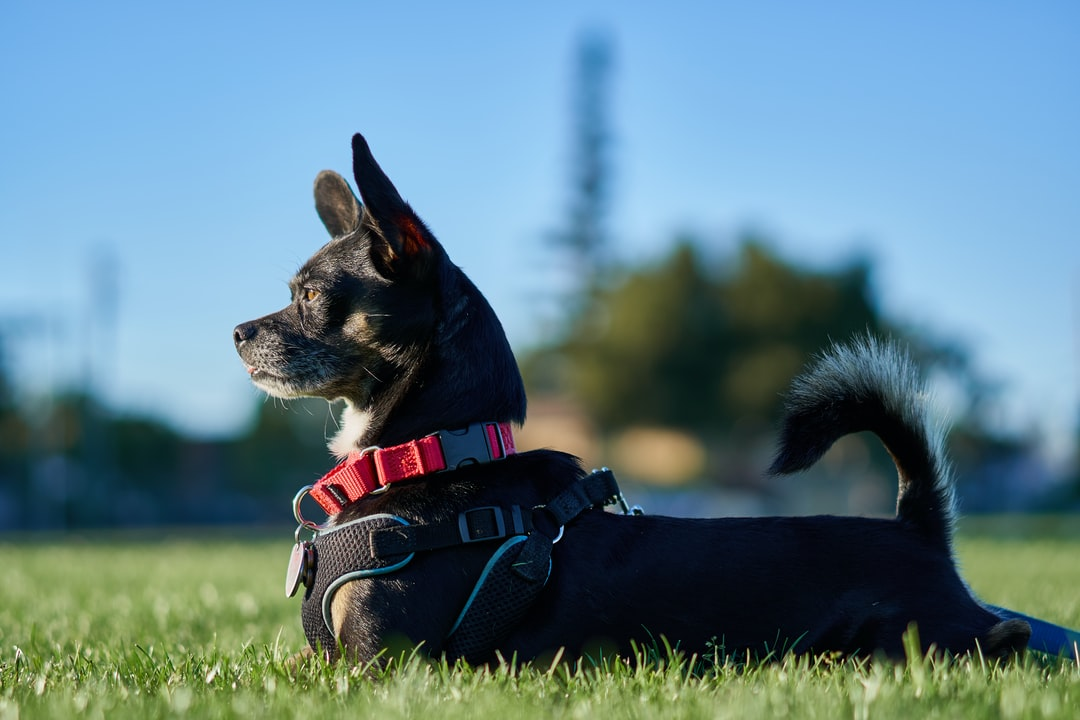 Dog laying on the grass in the park