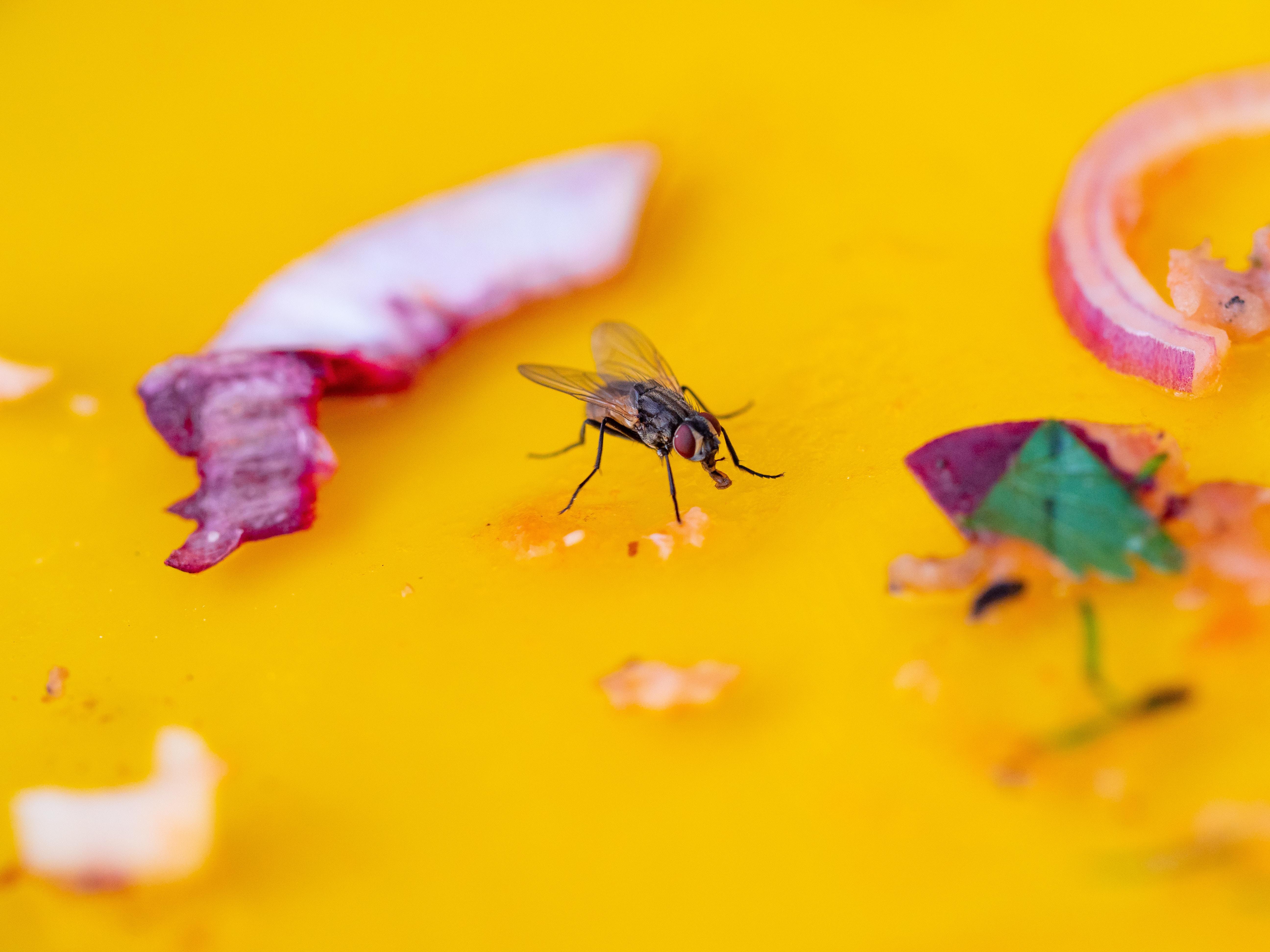 tilt shift photo of housefly