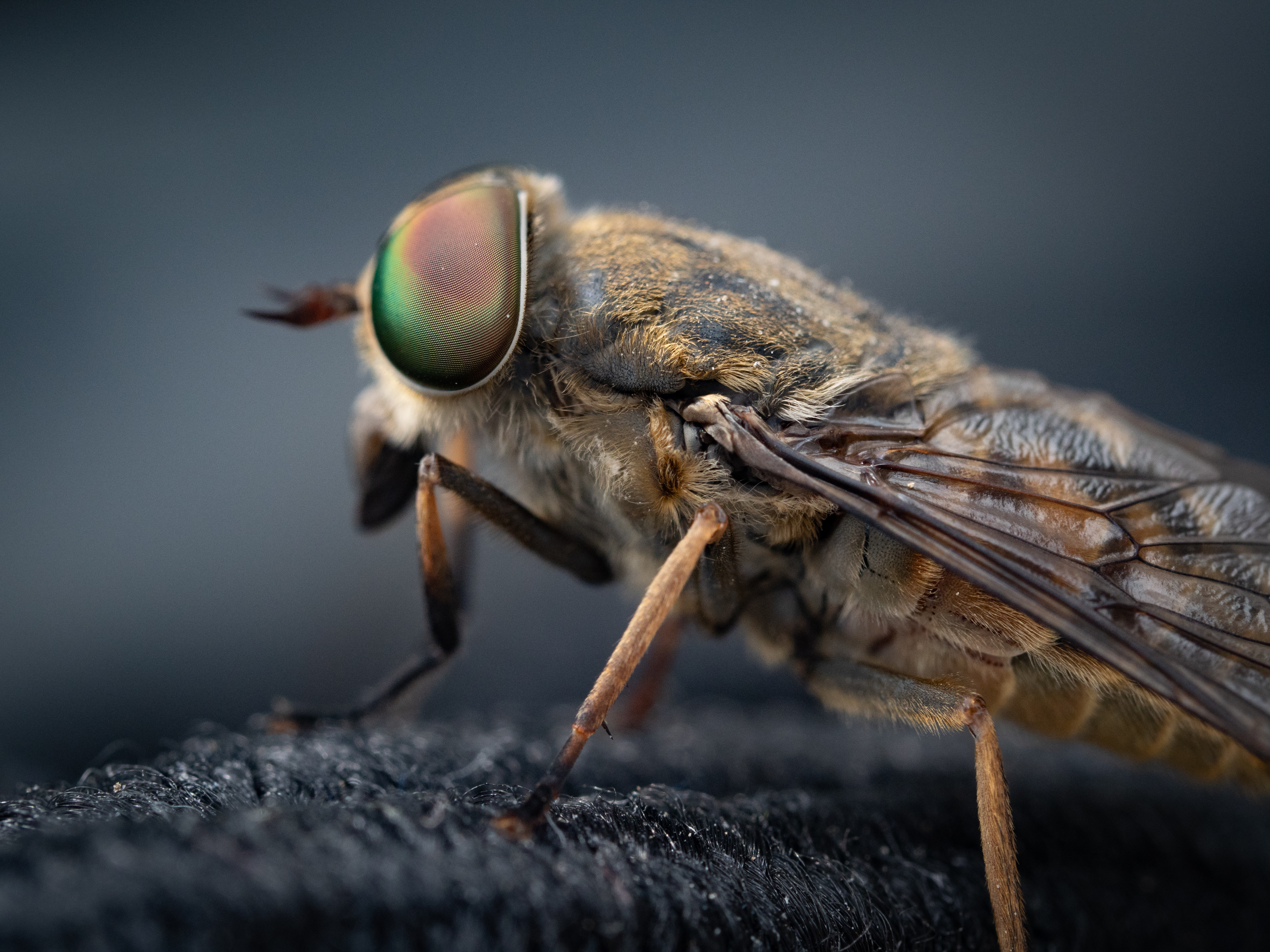 Hyperalarming Study Shows Massive Insect Loss