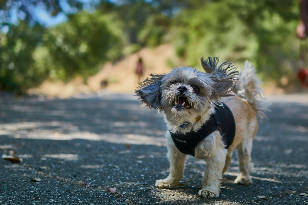 Una localidad francesa prohíbe los ladridos de perros