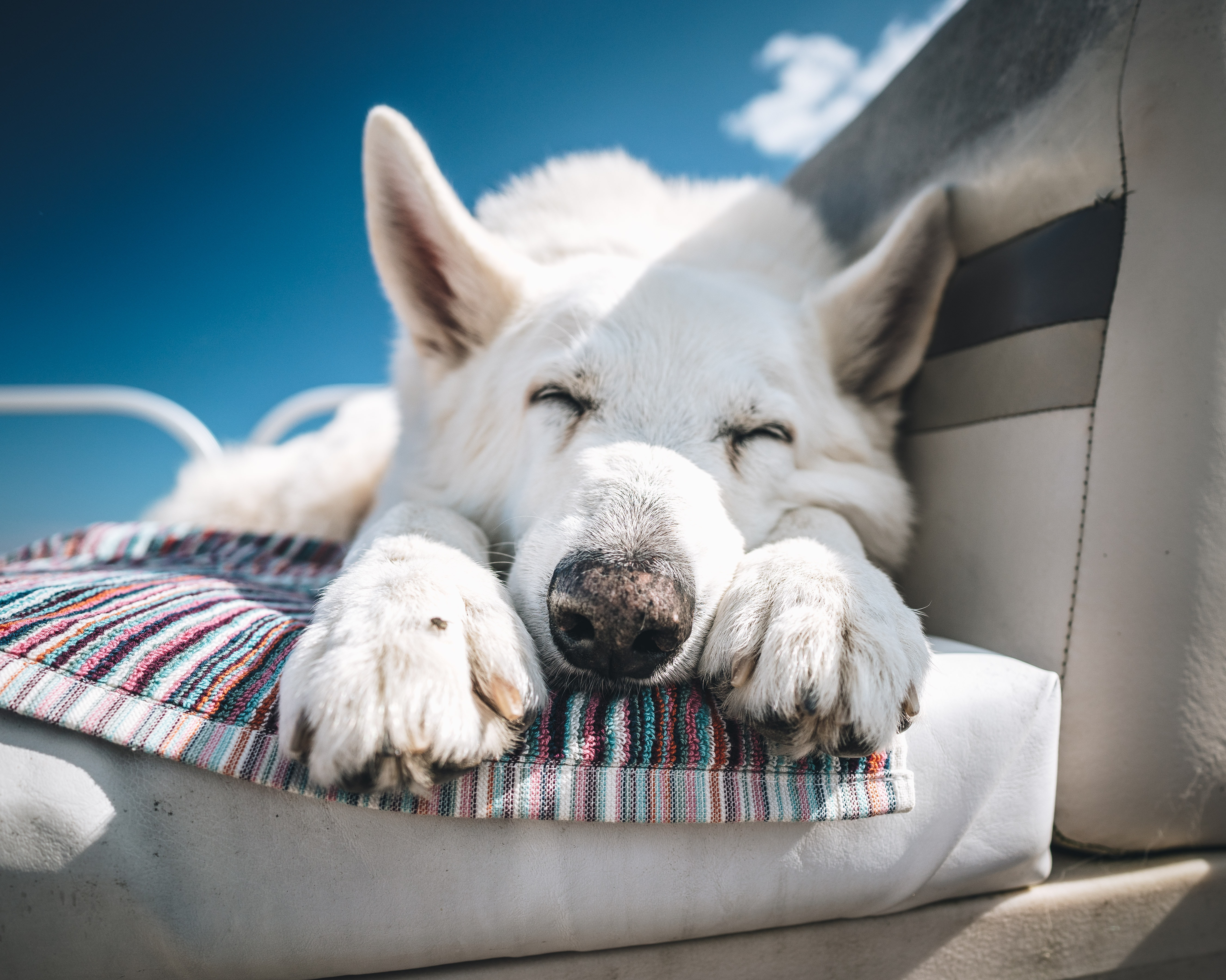 short-coated white dog lying on the bucket seat
