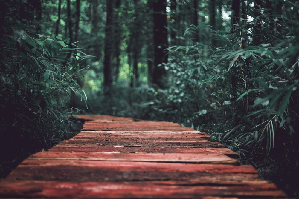 brown wooden path in the middle of green plants