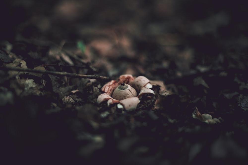 closeup photo of beige mushroom