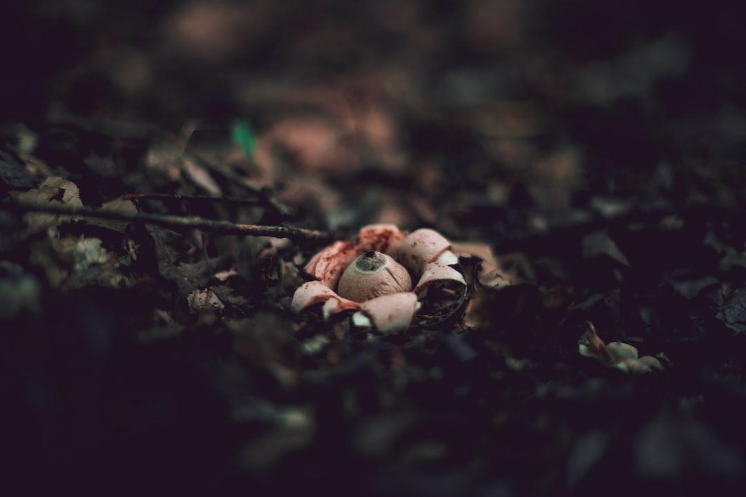 Earthstar Mushroom