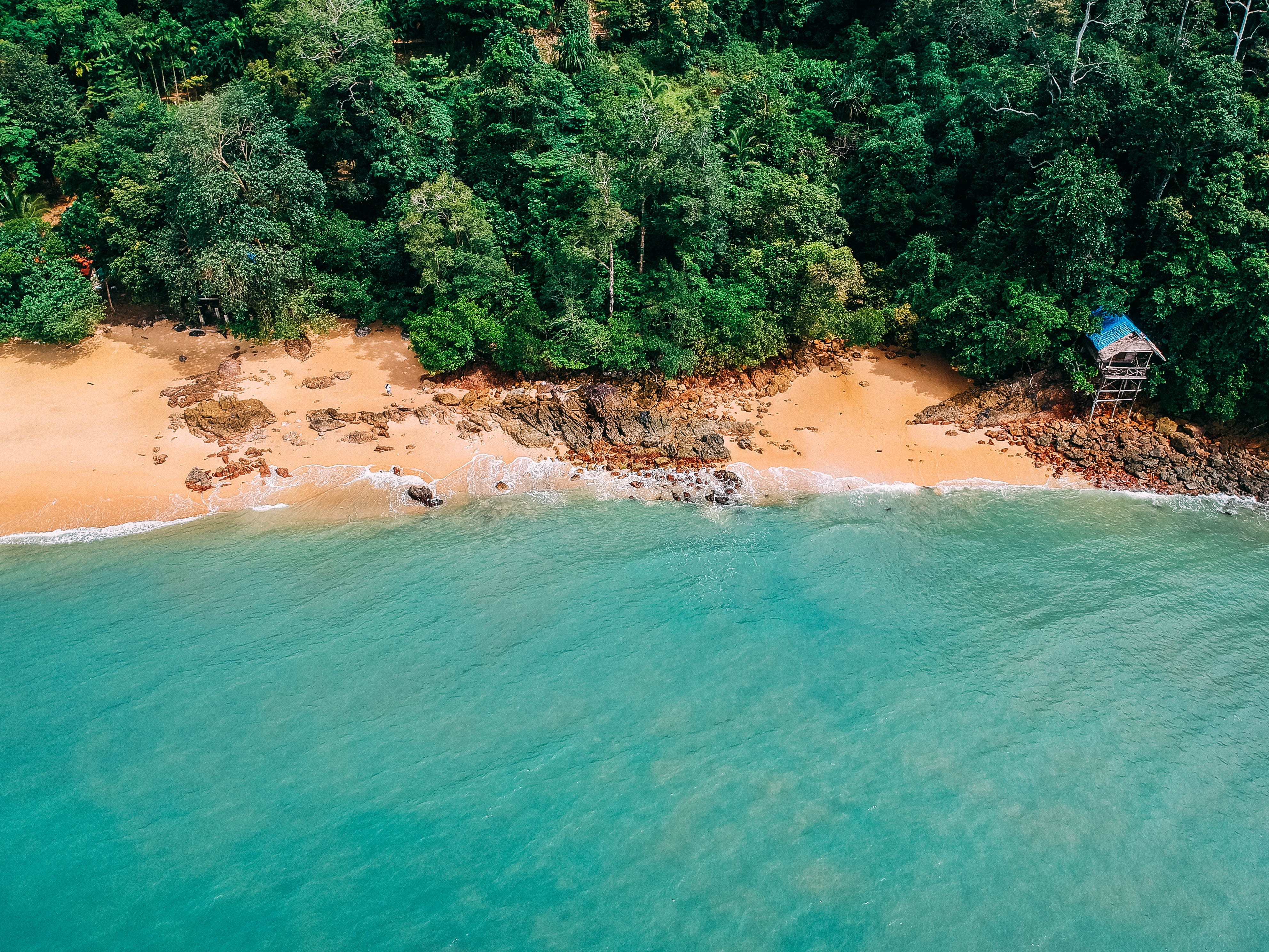 aerial photography of seashore near trees